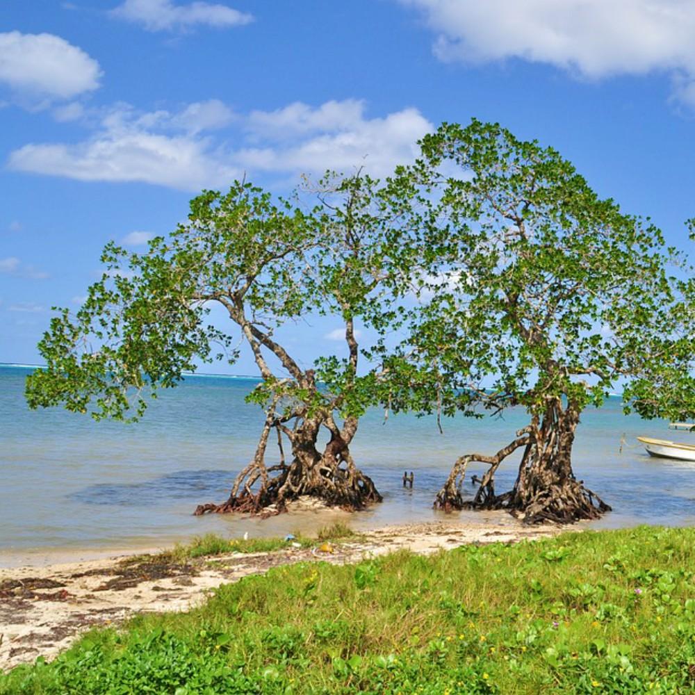 Bomen Honduras